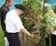 Historische rondleiding met bezoek aan de Rolduc wijngaard