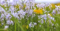 Vaartocht wilde bloemen - De Wieden