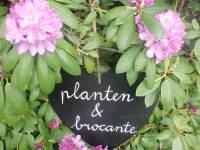 Planten & Brocante Verkoop in Laren