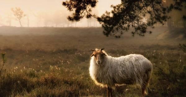 Wandeling met de boswachter Dwingelderveld