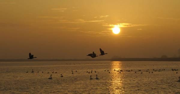 Excursie Vogeleiland