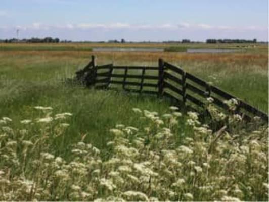 Wandelexcursie weidevogelgebieden Skrok en Skrins
