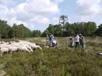 Praatje van de schaapherder