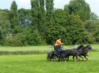 Evenement Paardenmarathon Ludinga