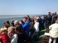 Evenement Zeehonden Safari vanuit Sint-Annaland