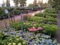 Evenement Zomerdagen bij PlantenTuin Esveld