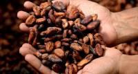 Evenement Cacaomaand in het Zaans Museum